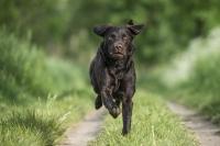 Lennox ist eine reine Sportskanone. Mit seinem Herrschen zusammen liebt er nicht nur CarniCross und DogScooting, sondern schwimmt auch sehr gerne. Unverzichtbar bei so einem Sportler sind sowohl Warm-Up, als auch CoolDown, und natürlich dürfen auch Massagen und Dehnungen nicht fehlen.